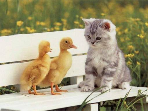 Kasih sayang makhluk